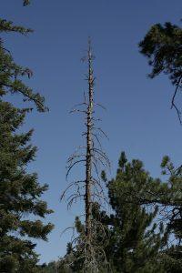 Arborist Services, Vancouver, GVRD, Fraser Valley